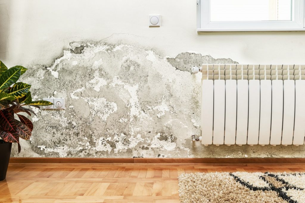Mold Issues and Filing a Successful Water Damage and Mold Claim