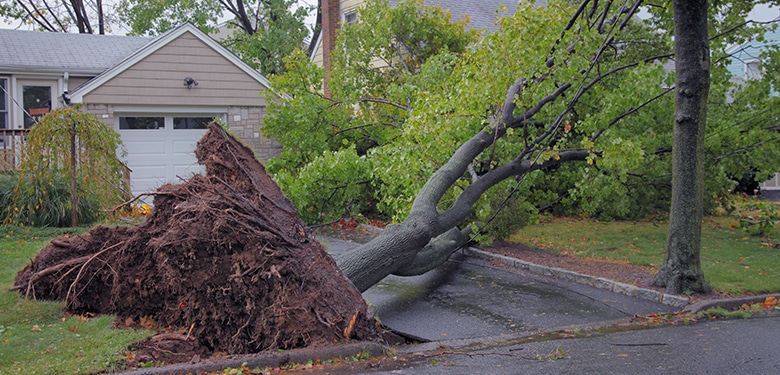 Wind Damage